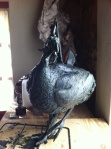 Wax sculpture, Guineafowl